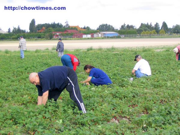 U_Pick_Strawberries-1