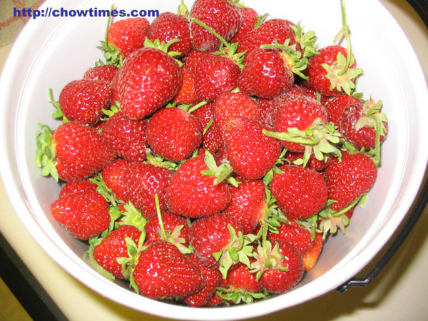 U_Pick_Strawberries-5
