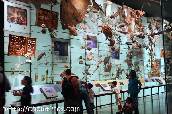museumnatauralhistory-10