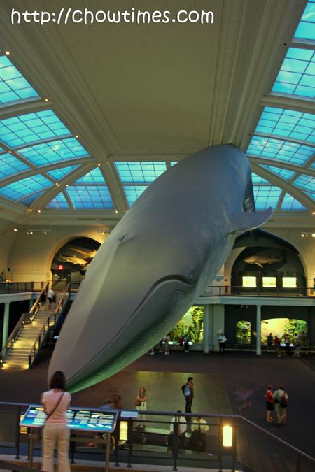 museumnatauralhistory-21