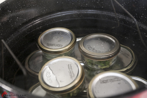 Canning-Beans-16