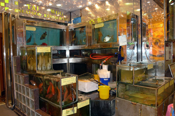 Tanks storing the freshest of seafood is common in good Cantonese seafood restaurants.