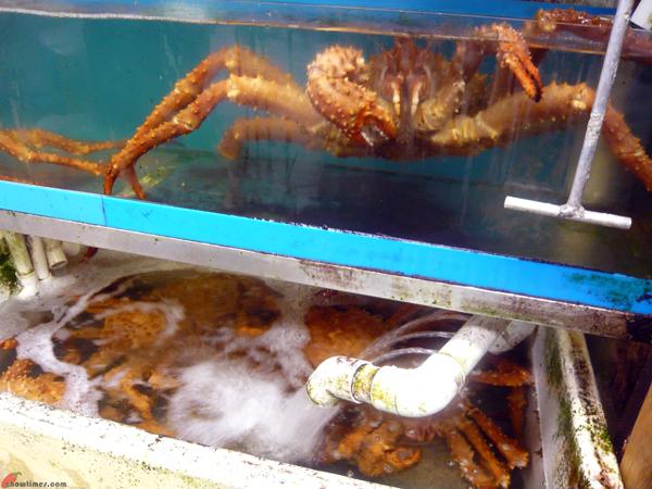 Free Download alaskan crab king kodiak leg red Pdf