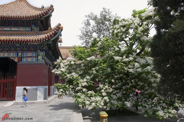 Lama-Temple-Beijing-15
