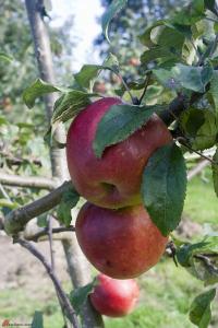 Applepalooza-21