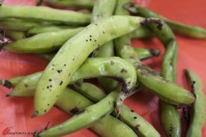 Fava-Bean-Soup-1