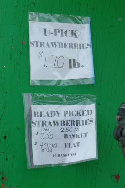U-Pick-Strawberries-Bob-Featherstone-Farm-2012-3