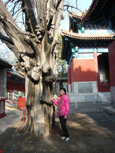 Beijing-Day-11-Confucius-Temple-5