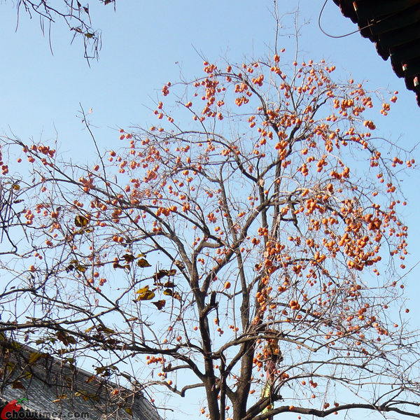Beijing-Day-11-Lama-Temple-6