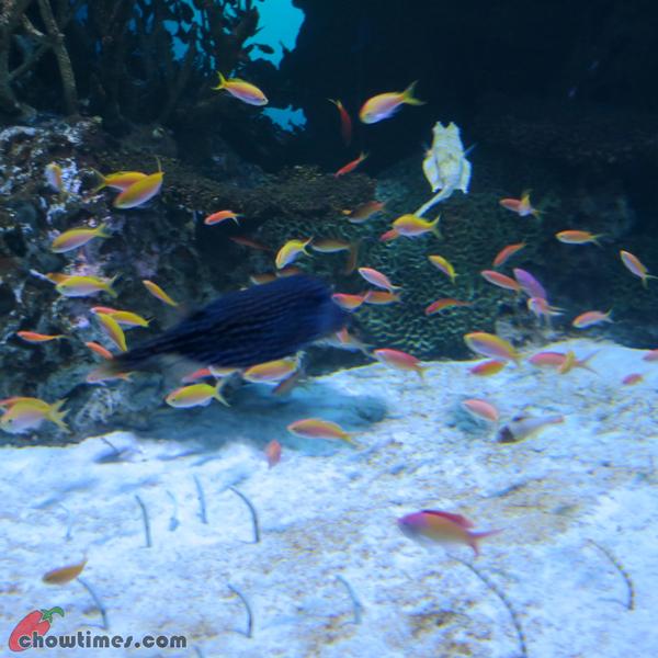 Atlanta-Day-2-Georgia-Aquarium-07