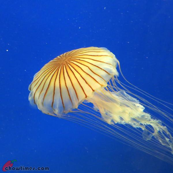 Atlanta-Day-2-Georgia-Aquarium-09