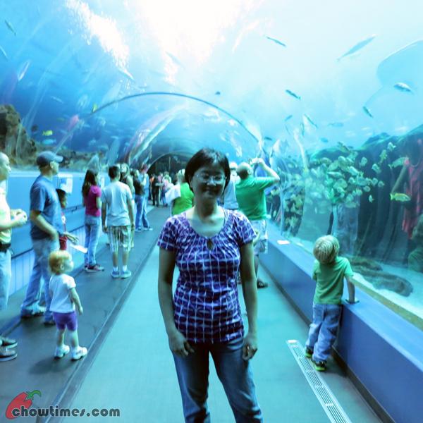 Atlanta-Day-2-Georgia-Aquarium-11