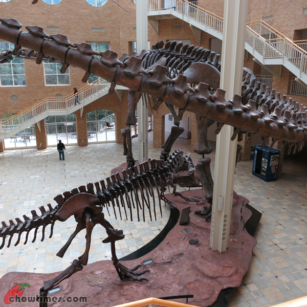 Atlanta-Day-5-Fern-Bank-Museum-of-Natural-History-02