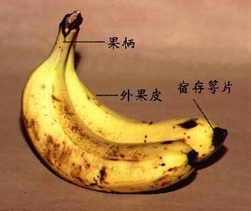 Dark-Spot-Banana-1