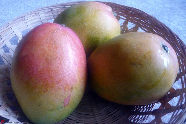 Mango-04
